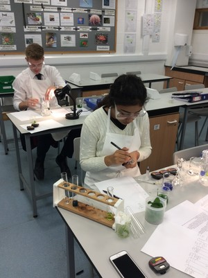 Biology a level practical on photosynthesis 1