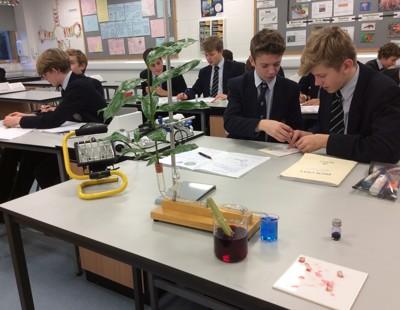 Biology transport in plants 1
