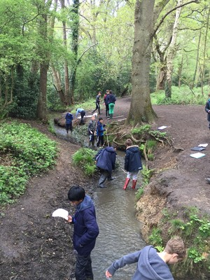 First form visit arbrook common